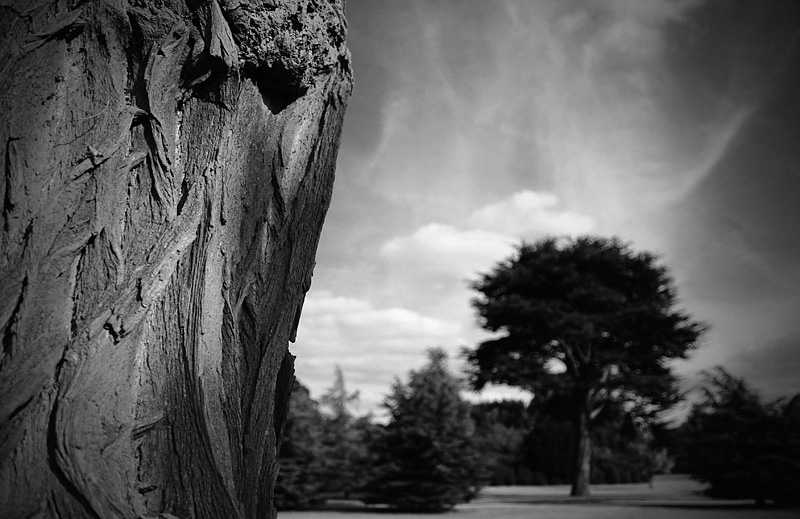 detail of a tree in the grounds belton house pearson dave