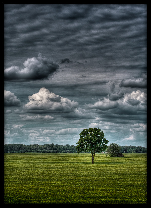 tree and clouds author mikhaylov andrey