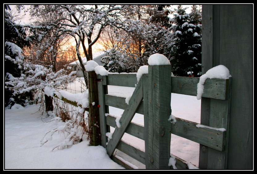 fence in winter author ackerson pat