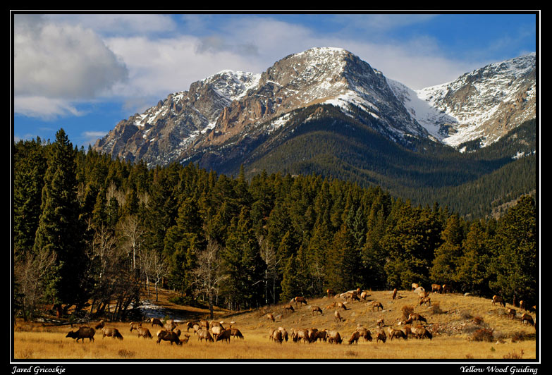 elk and mount chapin author gricoskie jared