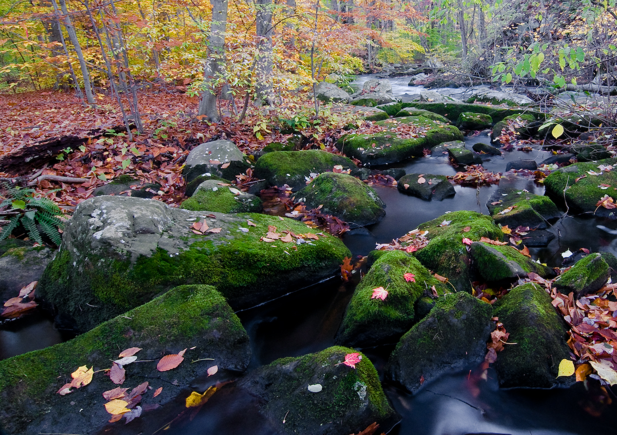 black river moss on a fall day in october author scherer kevin