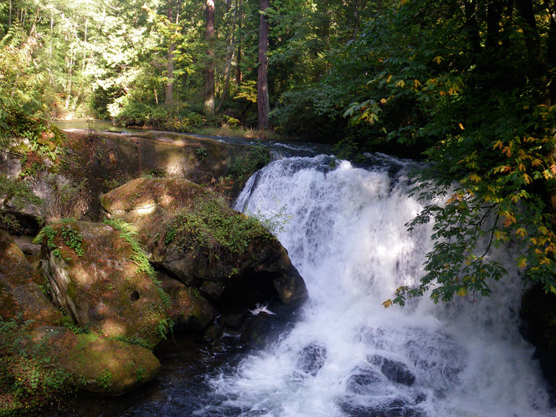 whatcom falls author root josh
