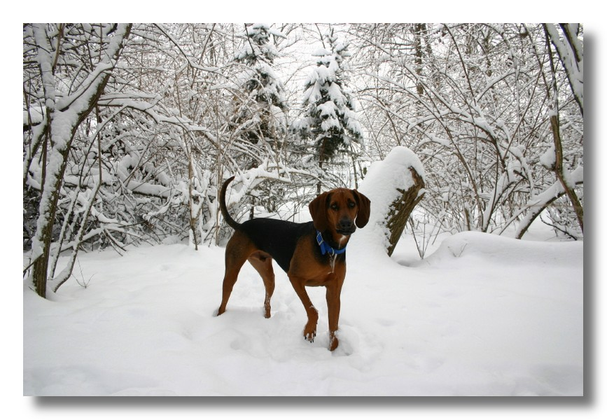jack in the snow author ackerson pat
