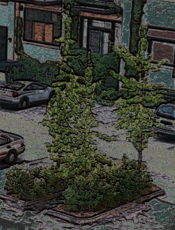 picture of a tree in my parking lot which i fooled laverdiere marc andre
