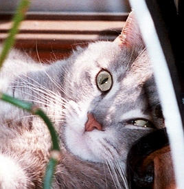 my cat lying under the shade author laverdiere m marc andre