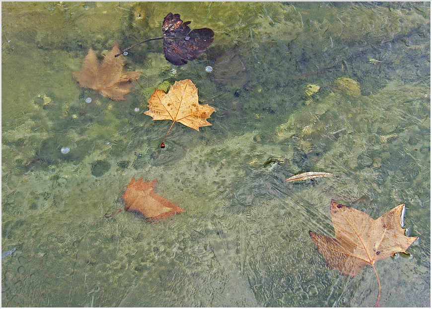 leaves in the frozen pond author celasun bulent