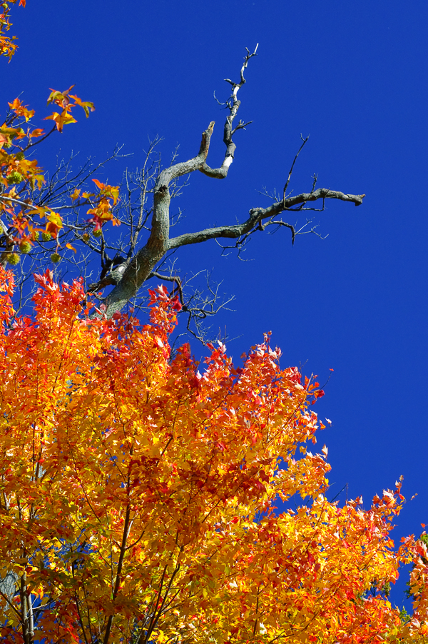fall color author gutowski anthony