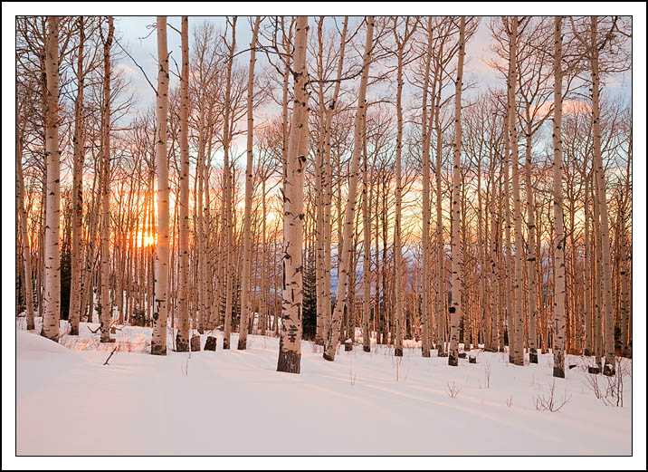 a pastel sunset sky shines through lovely stand edge bret