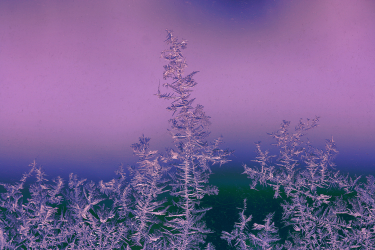 frost fooled around with author sava gregory an and verena