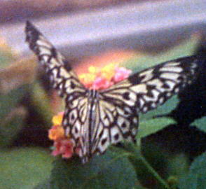 butterfly by the window author laverdiere marc an andre