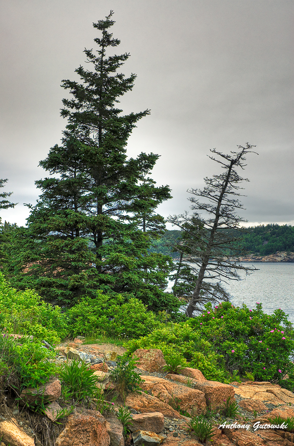 acadia view to the bay author gutowski anthony