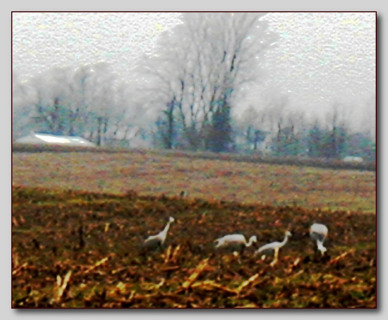 sandhill cranes abstract author ackerson pat