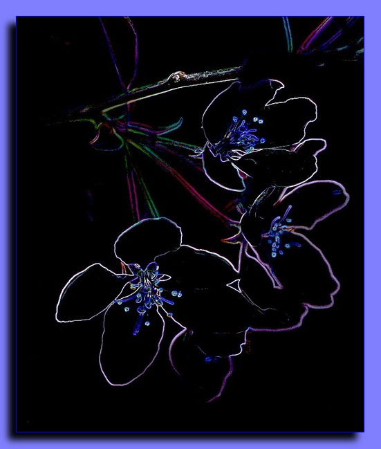 apple blossom abstract author ackerson pat