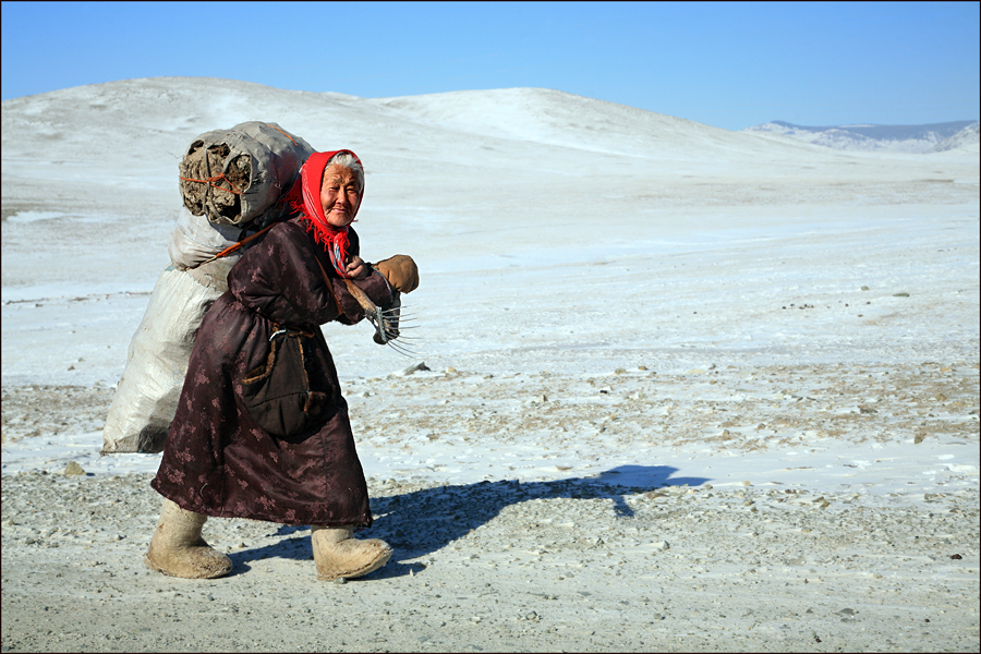 mongolian grandmother carrying cow dung for fuel schuler karl