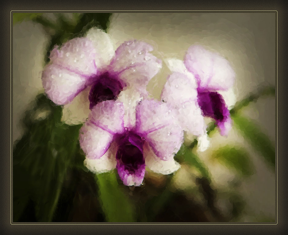 my home grown orchids author funke stephan