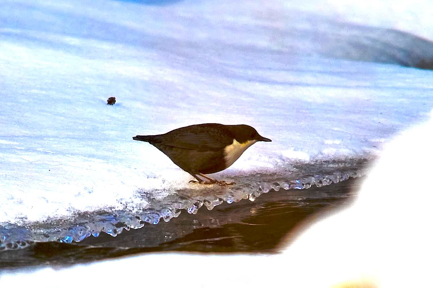 dipper watching for a pray author soini hannu