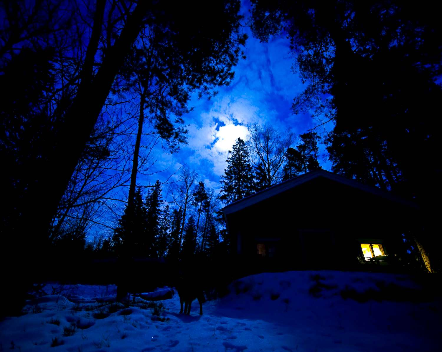 dog in the march blue night author soini hannu