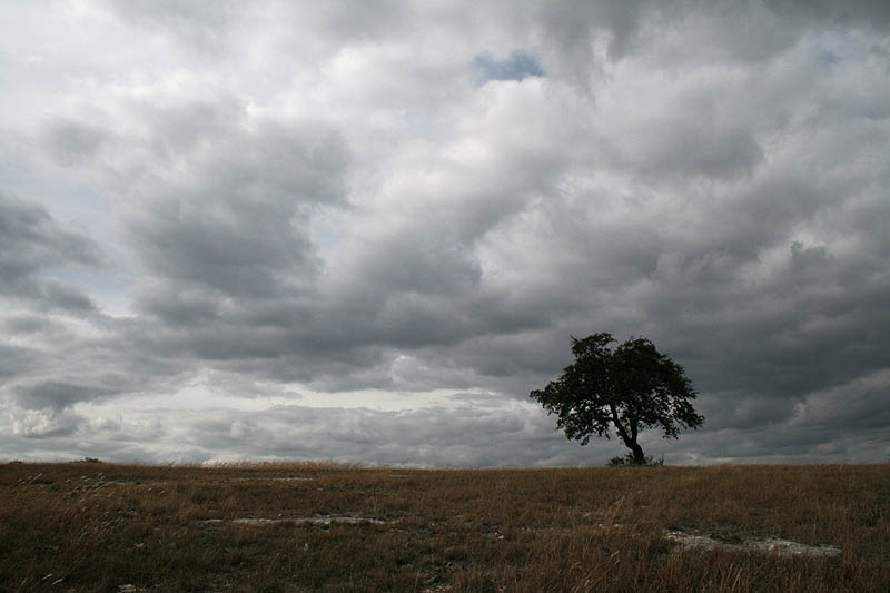 lonesome tree i hill country author day don
