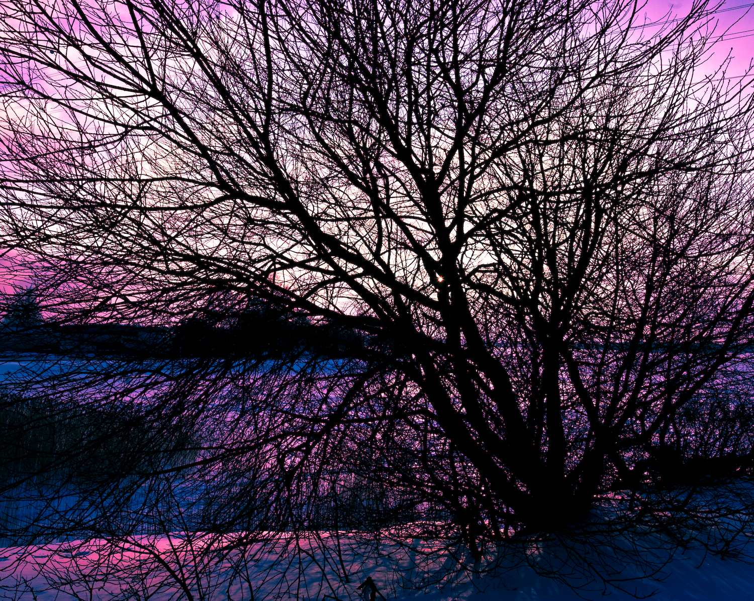tree in march sunset author soini hannu