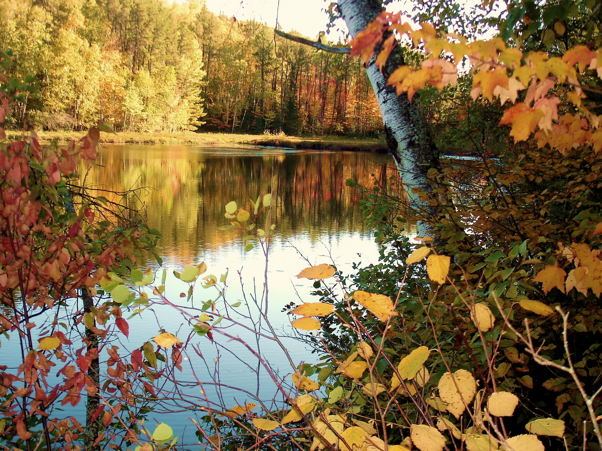 fall view of a small pond author pluskwik paul