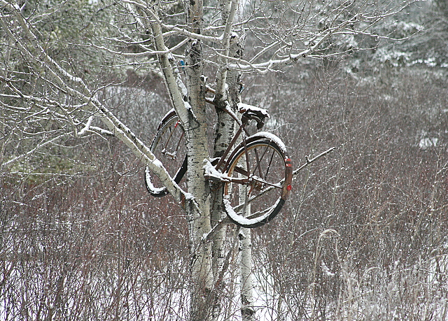 old bike up in tree author pluskwik paul