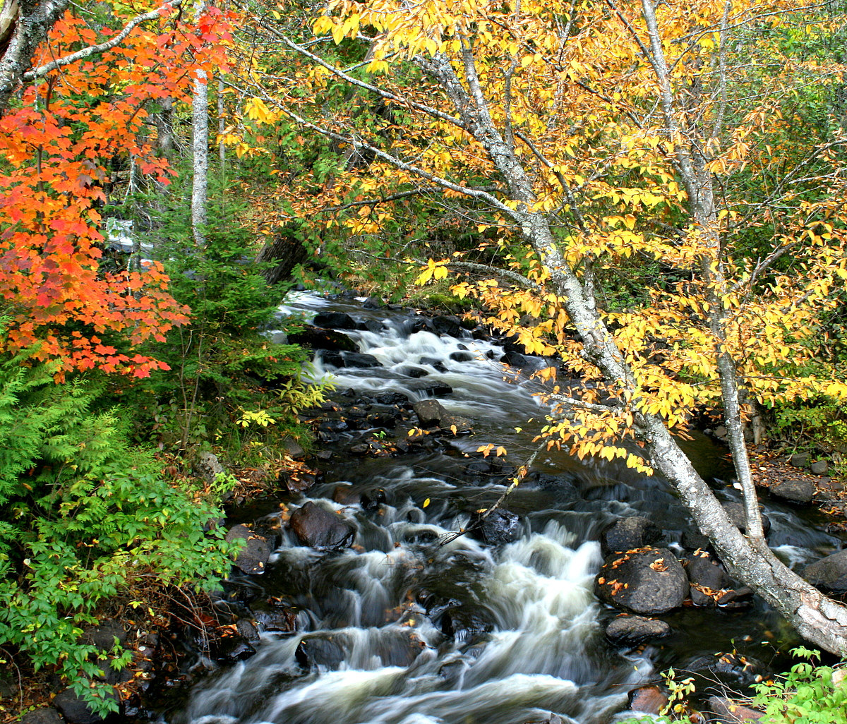 river flowing through the fall colors author plus pluskwik paul