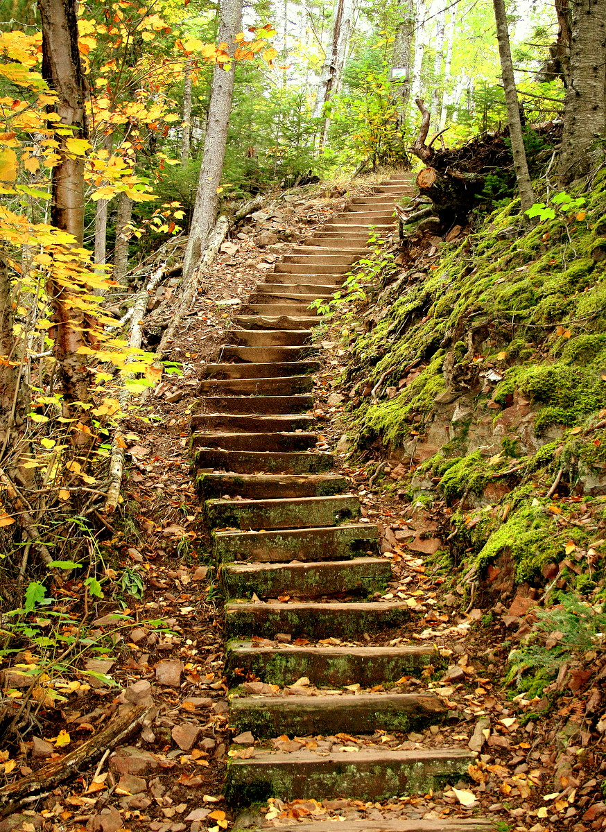 wooden stairs on a fall walk in the woods author pluskwik paul