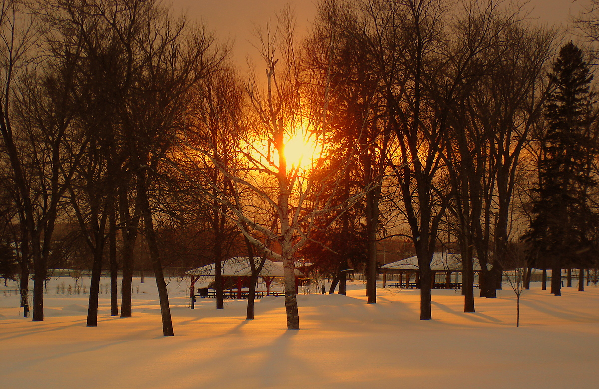 january sunset in the park author pluskwik paul