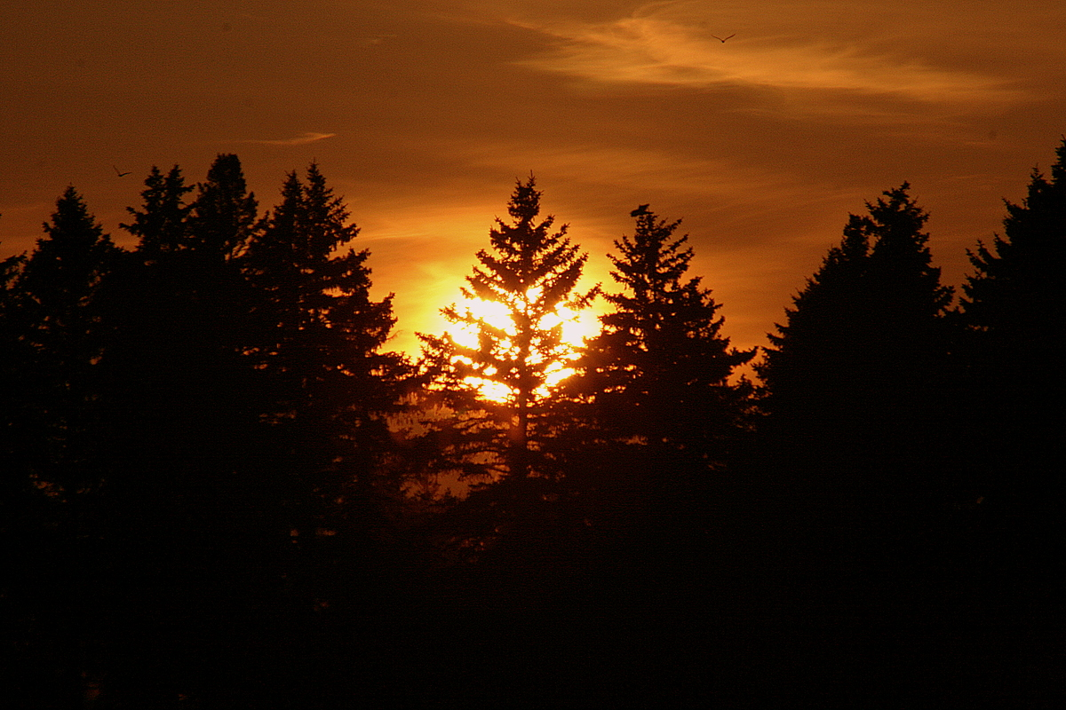 sunset behind the norway pines author pluskwik pa paul