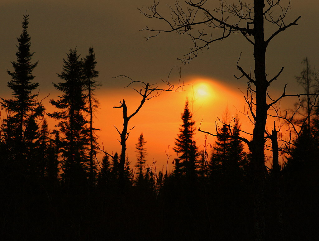 winter sunset through the trees author pluskwik p paul