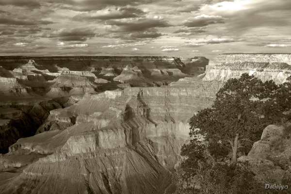 grand canyon view from pima point author chakrabo chakraborty debejyo