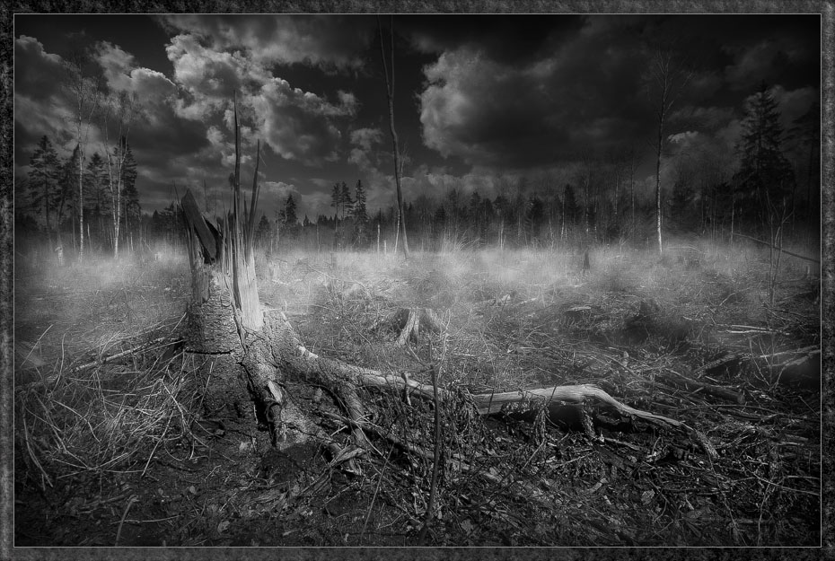 somewhere in wood author mikhaylov andrey