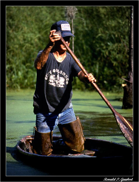 alligator trapping trapper paddling pirogue autho gaubert ronnie