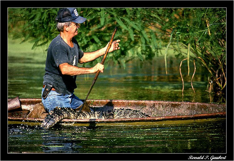 trapping from pirogue author gaubert ronnie