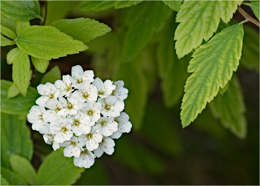 white flowers green leaves author celasun bulent