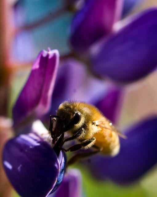 bee in action author soini hannu