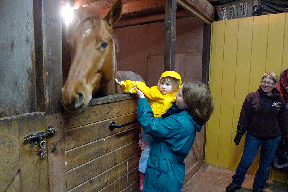 petting a horse author root josh