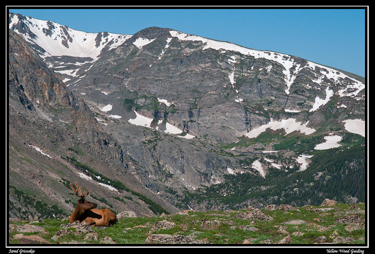 elk bull in the mountains author gricoskie jared