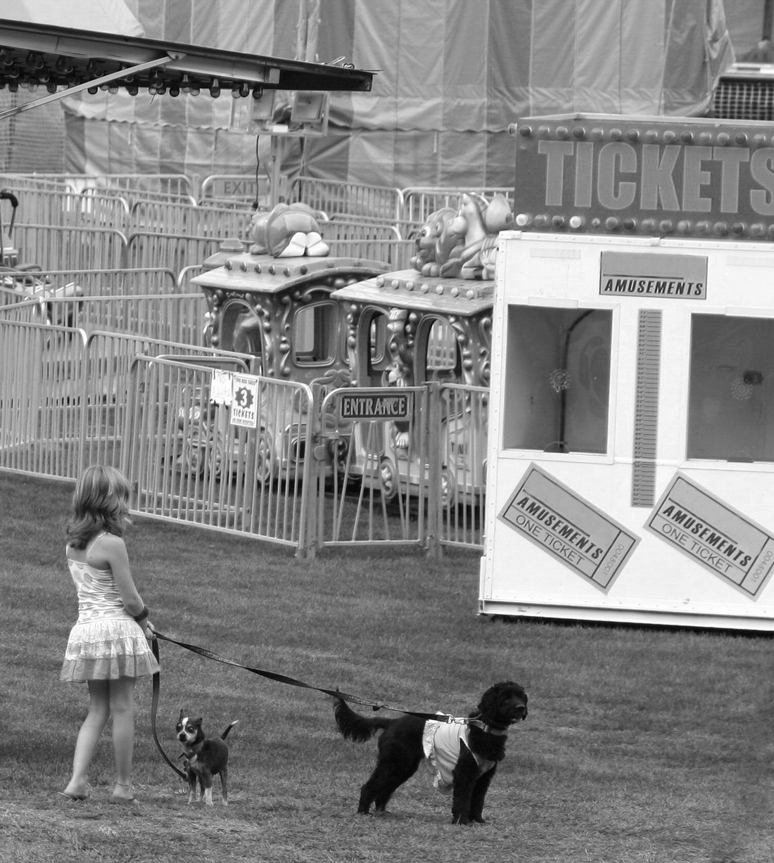 circus dogs for hire author osterman john
