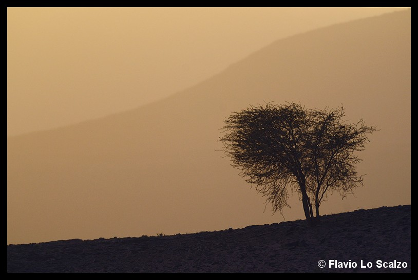 tree landscape near tata morocco author lo sca scalzo flavio