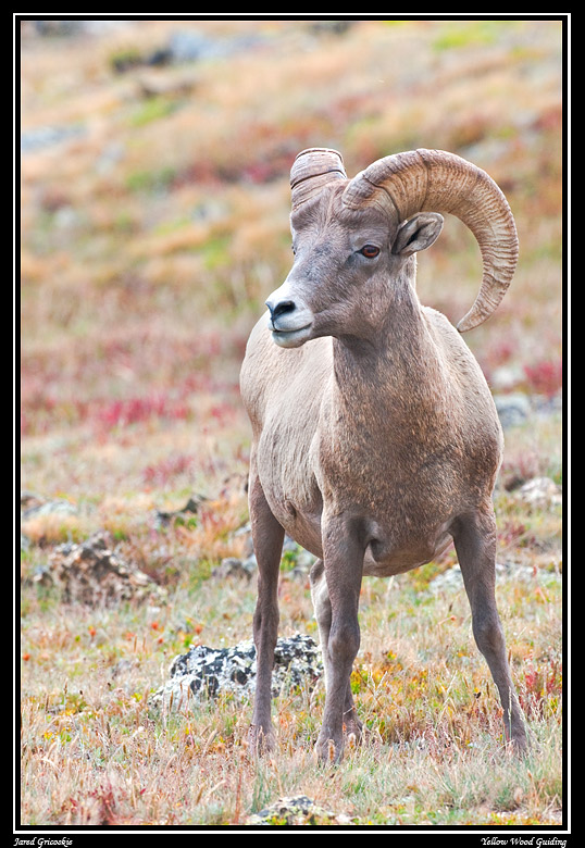 big horn tundra author gricoskie jared