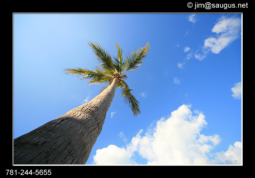 palm tree photo florida gulf of mexico anna maria harrington usa massachusetts j