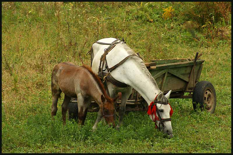 snack time for romanian mare foal author downs ji jim