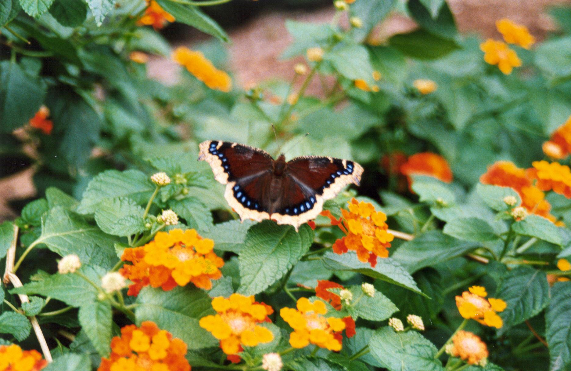 butterfly at insectarium author laverdiere marc a andre
