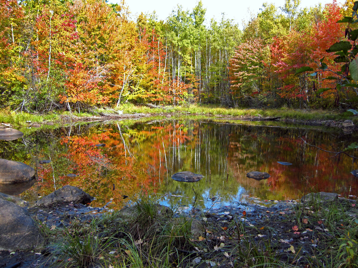 bright fall color around the small pond author pl pluskwik paul