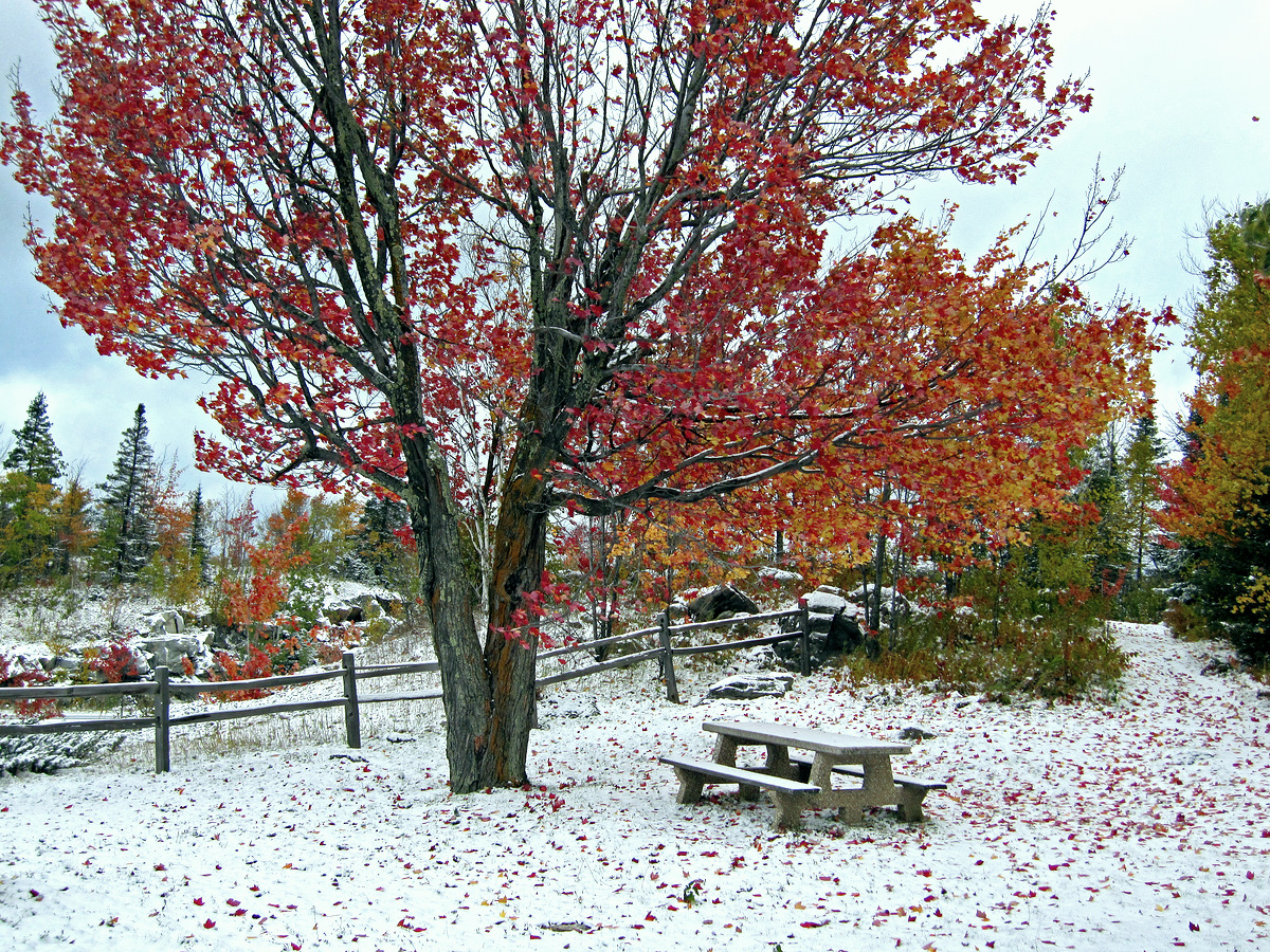 snow covered fall view author pluskwik paul