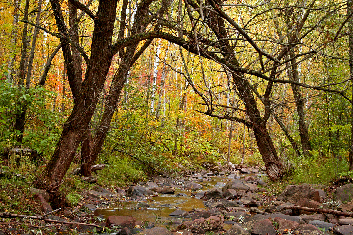 fall view of a small stream in the woods author pluskwik paul