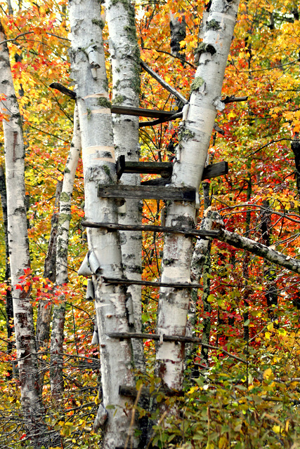 old deer hunting stand in the fall colors author pluskwik paul