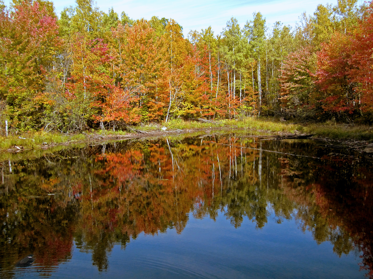 fall colors reflected author pluskwik paul