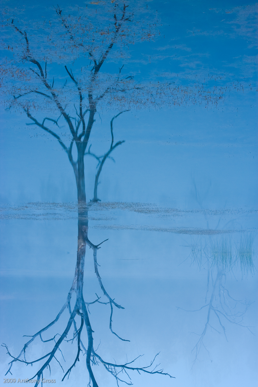 tree and lake author gross anthony